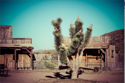 Joshua Tree at Grand Canyon Ranch